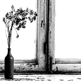 Михаил Нуждов_dry_flowers_on_the_window